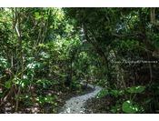 【客室とプライベートテラス(ビーチ)を結ぶアプローチ】各々の庭からジャングルを抜けるとオーシャンビューの絶景を臨めます。