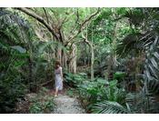 多幸の木とも呼ばれ、沖縄では神聖なものとされるガジュマルの木