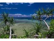 目の前の海は、抜群のシュノーケルスポット。ハナミノカサゴや色鮮やかな魚たち、サンゴなどが出迎えてくれます。