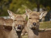 奇跡の一枚☆笑う鹿