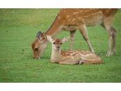 鹿に会いにきませんか?
