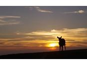 夕景の若草山と鹿