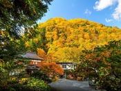周囲の木々が美しく色づきます