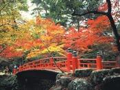 宮島 紅葉谷公園。秋の紅葉は大変美しいです。