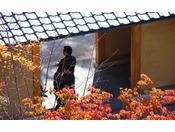 【秋】紅葉。10月上旬ぐらいより紅葉が始まります。