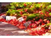【秋】中庭にて紅葉の絨毯