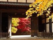 【弘前公園の紅葉】約1100本のカエデの紅葉は、古城の松の緑に映えて北国の恵まれた気候によってひときわ美しい色を見せます。