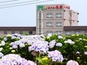 時期が合えばホテル周辺で紫陽花も見ることもできます。