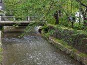 【高瀬川】桜で有名な高瀬川!春はホテル前の高瀬川沿いが満開の桜で埋め尽くされます。