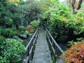 *秋のオススメの木々は柿の葉とかつらの葉、池にかかる橋の上から色鮮やかな庭の木々を眺めながらゆっくりと流れる時間をお楽しみください。