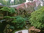 *玉庭では初春・1月から梅の花をお楽しみいただけます。