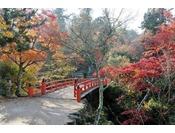 公園名にも使われた紅葉が絶景!宮島・紅葉谷公園