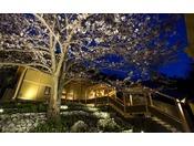 春は中庭の桜見が素晴らしい