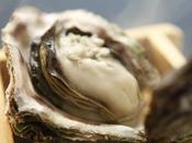 夏の味覚の王様 岩牡蠣当館おススメの食べ方は絶妙な火入れが旨みを閉じ込めた蒸し焼き