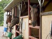 秋保森林スポーツ公園内の乗馬クラブ