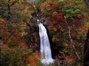 おすすめ観光スポット秋保大滝(秋)