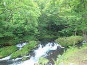 - 桂川 - 敷地すぐ横に渓流がございます