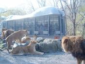 - 富士サファリパーク - 富士山を背景に世界中から集まった様々な動物たちが暮らしています!