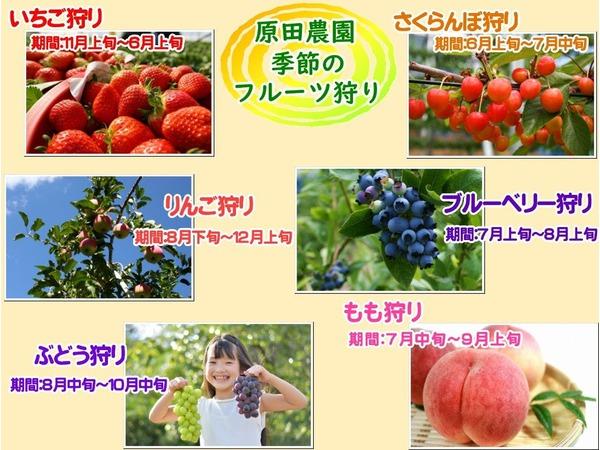原田農園 季節のフルーツ狩り