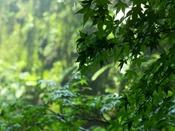 【ビューバスツイン】植栽を施した緑の壁をご覧いただけます(イメージ)