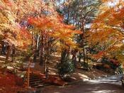 秋の修善寺 虹の里紅葉