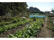 知多半島で採れた魚介や地元の有機野菜のほか、自家菜園・外庭で育てる無農薬野菜やハーブなども、お食事の際に提供させて頂いております。