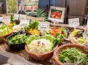 *【夕食バイキング(一例)】女性に人気のサラダコーナー。地元農家の新鮮野菜も♪