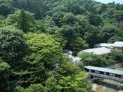 新緑の游月山荘。