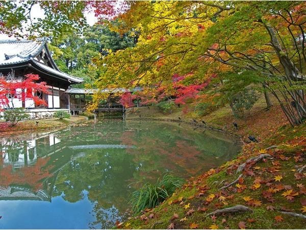 【高台寺】美しい臥龍池・庭園