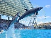 【名古屋港水族館】様々な海の生き物を見ることができるほか、イルカやペンギンなどのショーや、海の生き物に関する体験プログラムもお楽しみいただけます。当館から車で約40分。