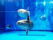 【アクアワールド】当館目の前!子供から大人まで楽しめる水族館です♪