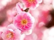 【偕楽園/春】国内屈指の観梅スポット