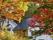 """秋には木々が紅らめはじめ、煌くトンネルが♪""""雅やかな世界""""をお楽しみ下さい"""