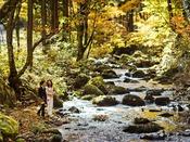 野鳥に昆虫、川遊び♪爽やかな風と共に様々な遊びを楽しめる広大な【3種のトレッキングコース】も♪