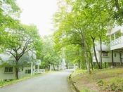 静寂に包まれた森のコテージ。1軒1軒独立しており、気兼ねなくお過ごしいただけます。全棟改装済み。