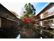 花の棟と桐の棟に囲まれた華の池。錦鯉が優雅に泳ぎます。鴨やカワセミなど、自然の鳥もご覧頂けます。