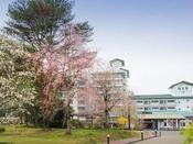 緑水亭の桜は、例年4月中旬~GWに見頃を迎えます。