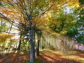 秋の景観(庭園の遊歩道)