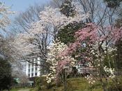 春のお花がお出迎え。