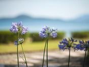 季節ごとに咲く花々。豊かな自然が心を癒してくれるはずです