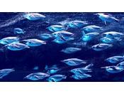 下関の水族館「海響館」 当館から約1時間!割引券もございます♪