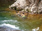 【川泳ぎ(車で約10分)】 日本でも有数の清流庄川で川遊び♪