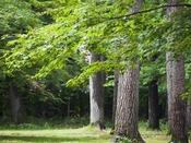 *爽やかな高原の緑と風が心地よい敷地内。