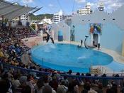 【神戸市立須磨海浜水族園】「スマスイ」の愛称で親しまれる水族館。イルカショーは必見!