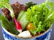 【ご朝食】朝採り地野菜のサラダ