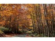 成長が遅いと言われるブナの木ですが、田沢湖高原では二次林でも活き活きと生い茂っており、散策道も整備されております。