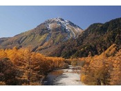 焼岳とカラマツ紅葉