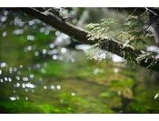新緑と清らかな清水川のせせらぎ