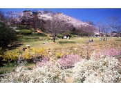 【平草原】当館より車で約10分春になると満開の桜をお楽しみいただけます。