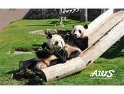 【アドベンチャーワールド】白浜のアイドル「パンダ」に会えるテーマパークです。
